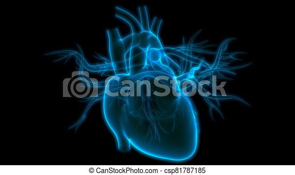 übertragung, system, internes herz, organ, röntgenaufnahme, koerperbau, zirkulierend, 3d, menschliche  - csp81787185