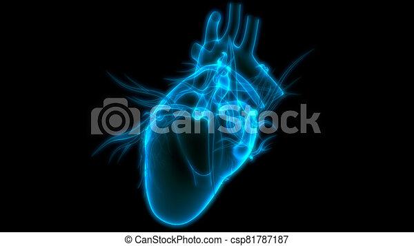 übertragung, system, internes herz, organ, röntgenaufnahme, koerperbau, zirkulierend, 3d, menschliche  - csp81787187