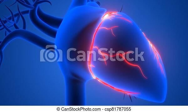 übertragung, system, internes herz, organ, röntgenaufnahme, koerperbau, zirkulierend, 3d, menschliche  - csp81787055