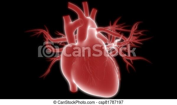 übertragung, system, internes herz, organ, röntgenaufnahme, koerperbau, zirkulierend, 3d, menschliche  - csp81787197