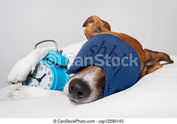 Hund schläft mit Wecker und Schlafmaske - csp12290143