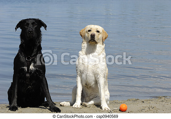 Alter und junger Hund - csp0940569
