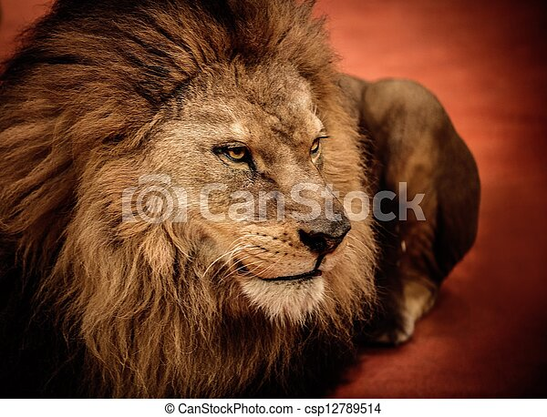 Der Löwe liegt auf der Arena - csp12789514