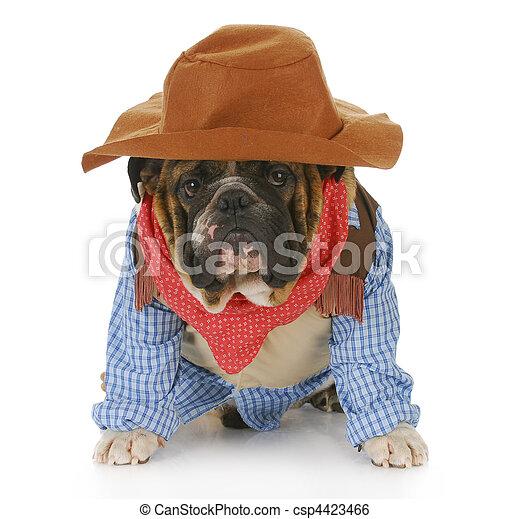 auf, angezogene , hund, mögen, cowboy - csp4423466