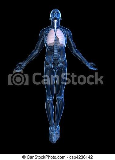 Aufregender menschlicher Körper - csp4236142
