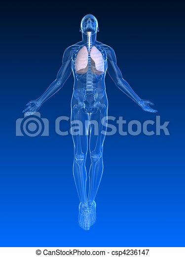 Aufregender menschlicher Körper - csp4236147