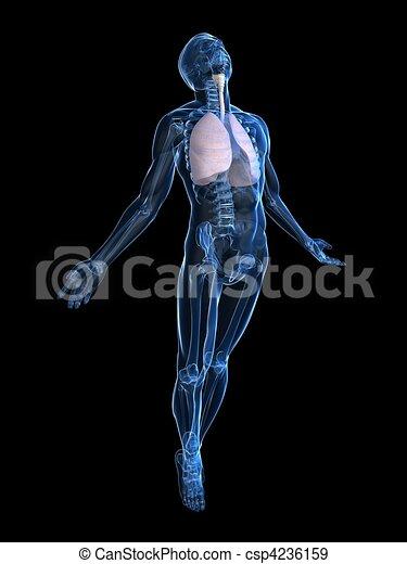 Aufregender menschlicher Körper - csp4236159