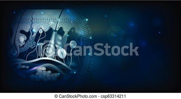 Skin Anatomie detaillierte Struktur abstrakt - csp63314211