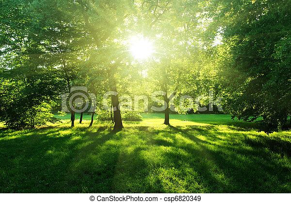 Bäume in einem Sommerwald - csp6820349
