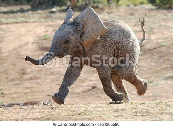 Baby-Elefant läuft - csp4385590