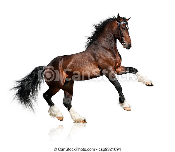 Bay Horse isoliert auf weiß - csp9321094