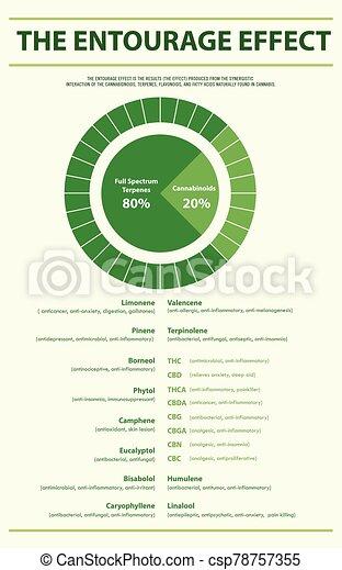 begleitung, infographic, effekt, senkrecht, verhältnis - csp78757355