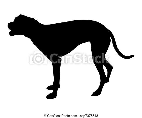 Bellender Hund - csp7378848