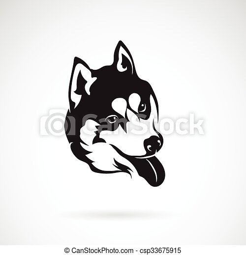 bild, hund, sibirisch, vektor, hintergrund, heiser, weißes - csp33675915