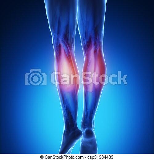 Gastrocnemius - blaue Muskelanatomie - csp31384433