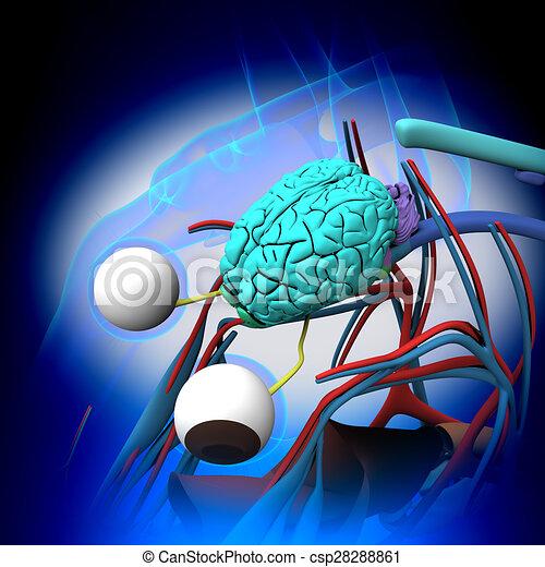 Horse Brain Anatomy - Querschnitt auf blauem Hintergrund - csp28288861