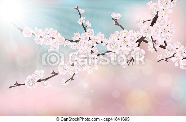Blossom Kirschbaumzweig - csp41841693