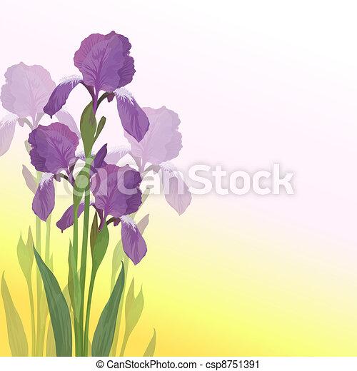 Blumen Iris auf rosa und gelbem Hintergrund - csp8751391