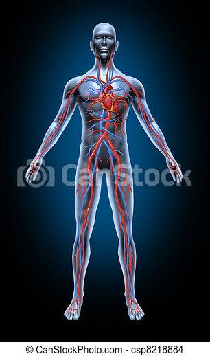 Menschliche Blutzirkulation - csp8218884