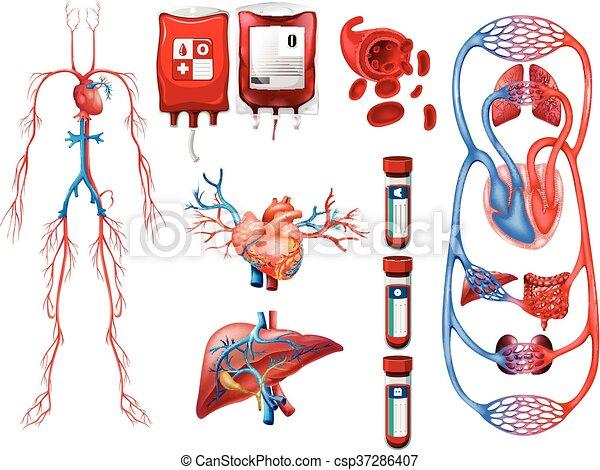 Blutgruppe und Atemsystem. - csp37286407