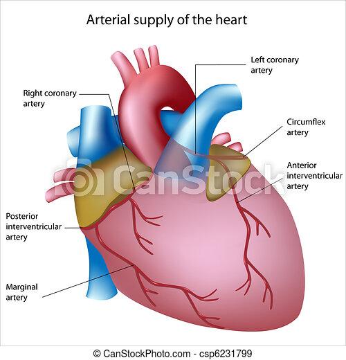 Blutversorgung ins Herz - csp6231799