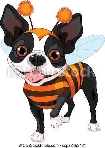 Halloween Boston Terrier - csp22493421
