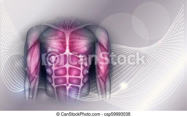 Brust- und Bauchmuskeln - csp59993038