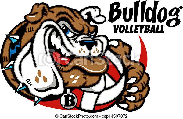 Bulldog mit Volleyball - csp14507072