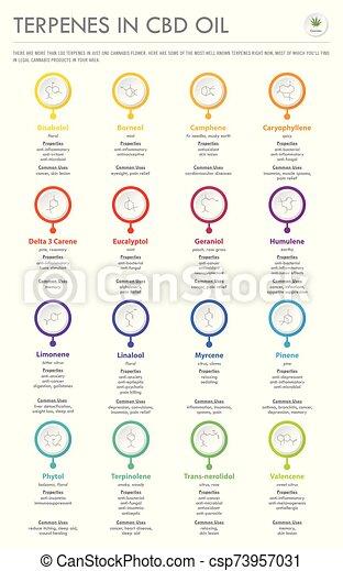 cbd, oel, infographic, senkrecht, geschaeftswelt, formeln, strukturell, terpenes - csp73957031