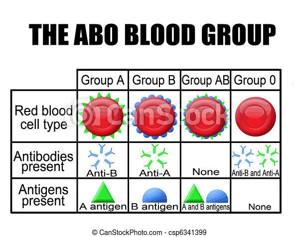 Das ABO-Blutgruppe-Diagramm - csp6341399