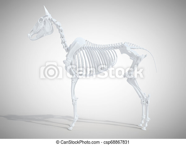 Das Skelettsystem. - csp68867831