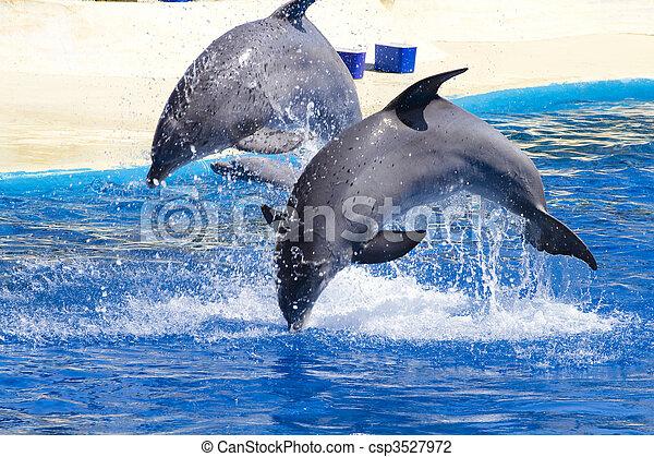 Delfin springt im Pool aus dem Wasser - csp3527972