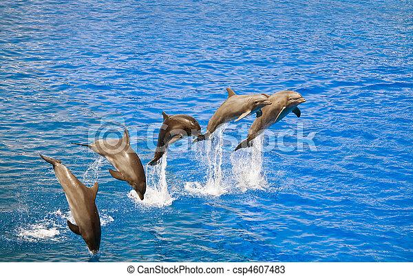 Delfine springen aus dem Wasser - csp4607483