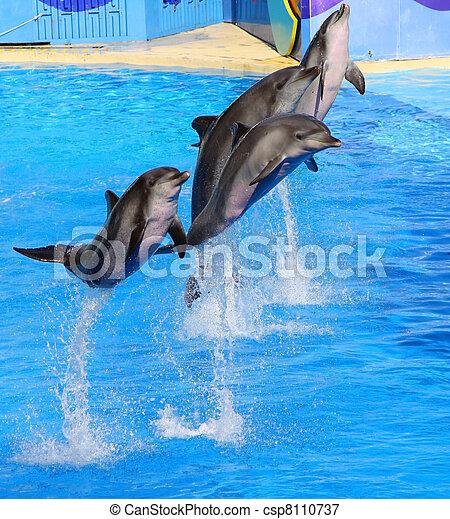 Delfine springen hoch aus blauem Wasser - csp8110737
