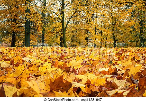 Der Herbst lebt noch mit gelben Ahornblättern - csp11381947