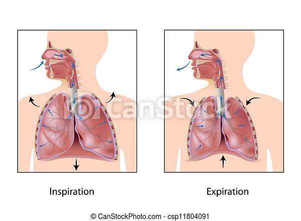 Der Kreislauf der Atmung, Eps10 - csp11804091