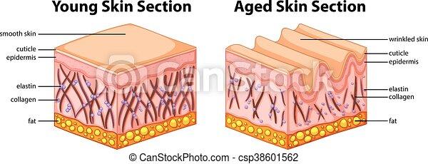 diagramm, ausstellung, antikisiert, junger, haut - csp38601562
