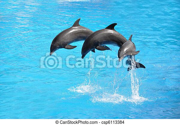Drei Delfine - csp6113384