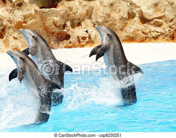 Drei Flaschen Delfine - csp6230251