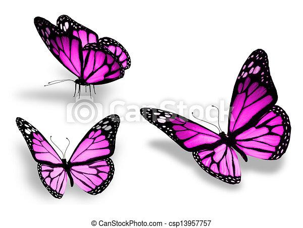 Drei violette Schmetterlinge, isoliert auf weißem Hintergrund - csp13957757