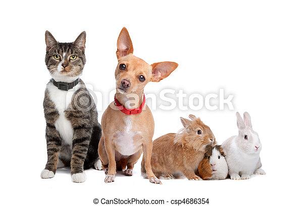 Eine Gruppe von Haustieren - csp4686354