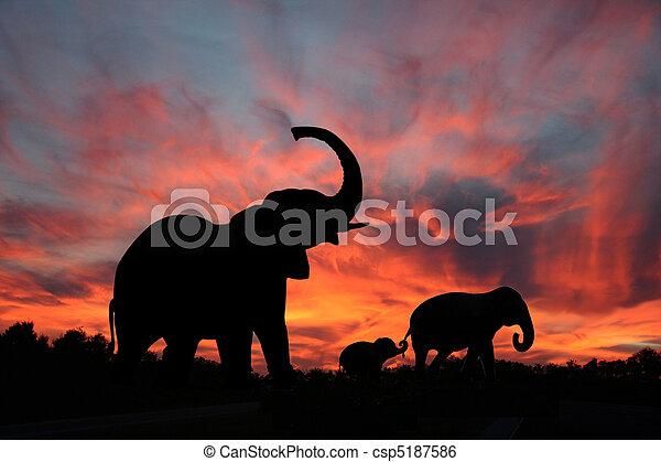 Elefanten Silhouette Sonnenuntergang. - csp5187586