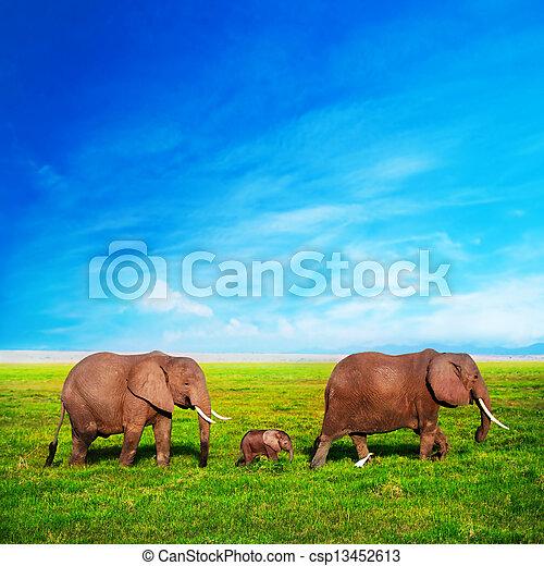 Elefantenfamilie auf Savana. Safari in amboseli, kenya, afrika - csp13452613