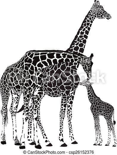 Erwachsene Giraffen und Baby Giraffe. - csp26152376