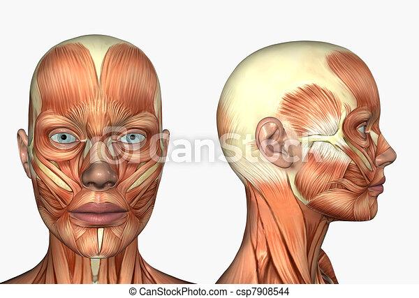 Weiblicher Kopf mit Muskeln - csp7908544