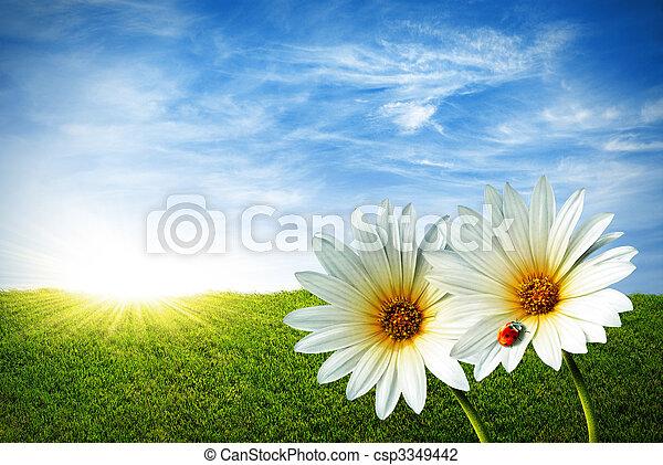 Frühling - csp3349442