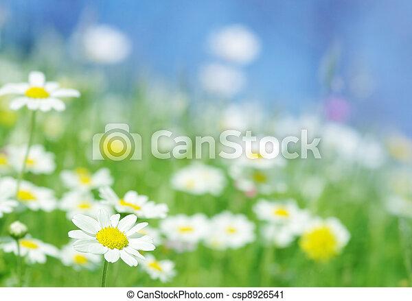 Frühlingsblumen. - csp8926541