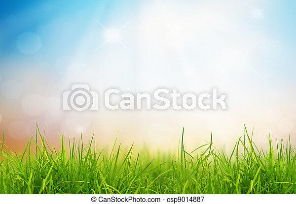 Frühlingsnatur mit Gras und blauer Himmel hinten - csp9014887