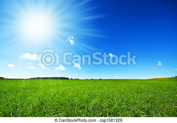Frisches grünes Gras mit hellblauem Himmel - csp1581329