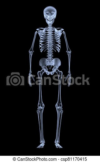 front, skeleton., röntgenaufnahme, ansicht, menschliche  - csp81170415